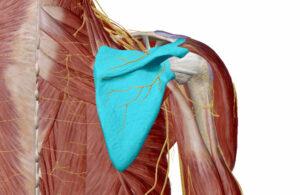 肩こりと肩甲骨